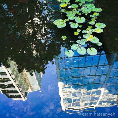 Spitalfield-Refelctions